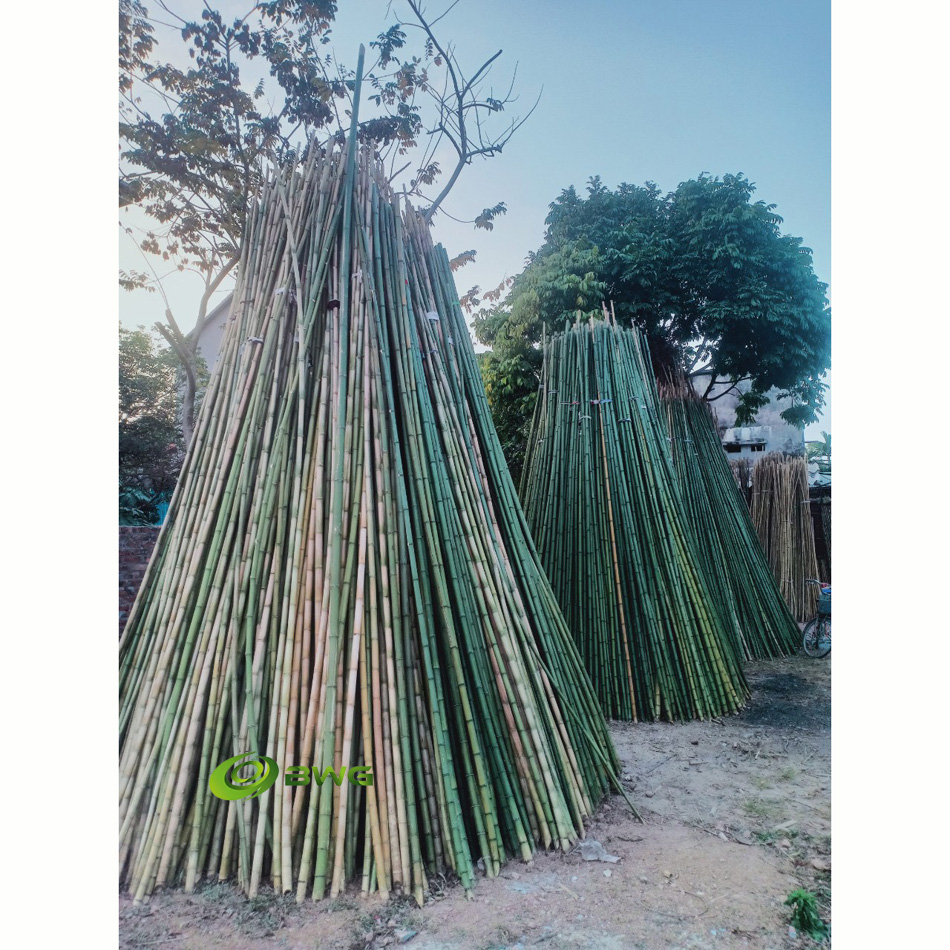 Bamboo Poles/ Stakes/ Sticks/ Canes for plants and tree guards - Vietnam